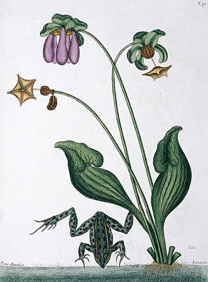 Water Frog Print by Natural History Museum, London