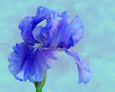 Water Iris Print by Nikolyn McDonald