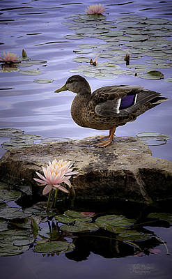 Wild Duck Photograph - Water Lilies Feathers And Beak by Julie Palencia