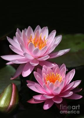 Water Lilies Love The Sun Print by Sabrina L Ryan