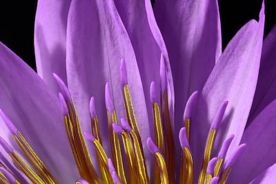 Purple Flowers Photograph - Water Lily-0005 by Russ Greene