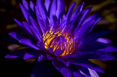 Nature Center Pond Photograph - Water Lily 7 by Julie Palencia