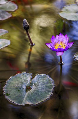 Happy Photograph - Water Lily 7 by Scott Campbell