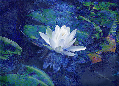 Lilly Pond Photograph - Water Lily by Ann Powell