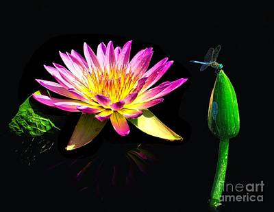 Water Lily Dragon Fly Print by Nick Zelinsky