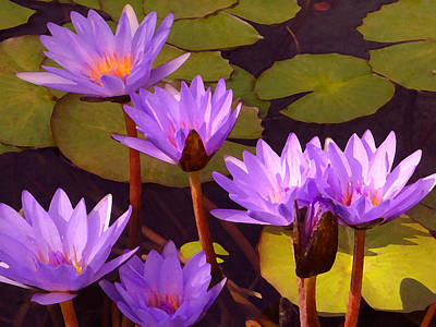 Lilies Digital Art - Water Lily Pond by Amy Vangsgard