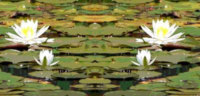 Lilies Mixed Media - Water Lily Poster by Dan Sproul