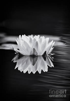 Water Lily Reflection Print by Tim Gainey