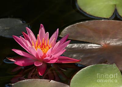 Treasure Coast Photograph - Water Lily Soaking Up The Sunlight by Sabrina L Ryan