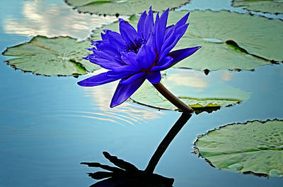 St Louis Photograph - Water Lily by Steven  Michael