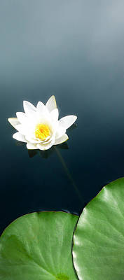 Water Lilly Photograph - Water Lily Study 2 by Ron Regalado