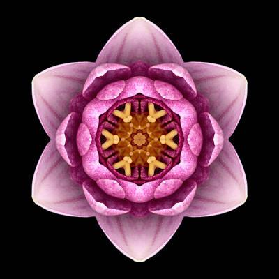 Water Lily X Flower Mandala Print by David J Bookbinder