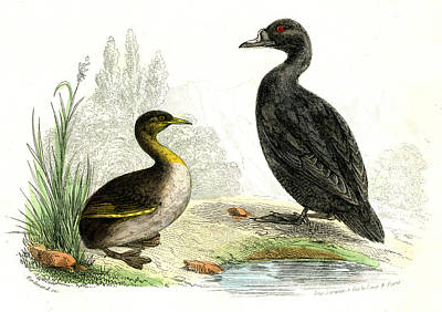 1859 Photograph - Waterbirds by Collection Abecasis