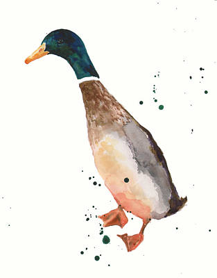 Mallards Painting - Watercolor Duck by Alison Fennell