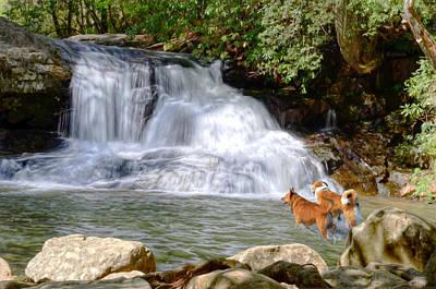 Waterfall Dogs Print by Bob Jackson