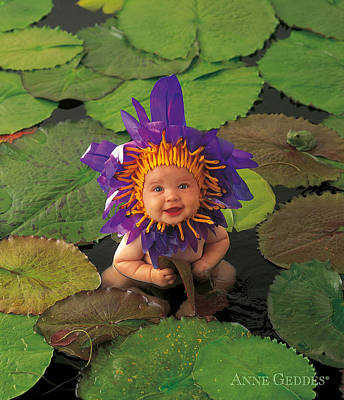 Purple Photograph - Waterlily by Anne Geddes
