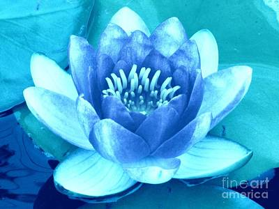 Waterlily Blue 2 Print by Margaret Newcomb