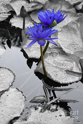 Waterlily Love Print by Jennifer White