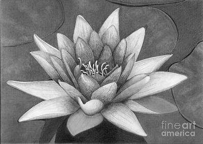 Waterlily Print by Nicola Butt