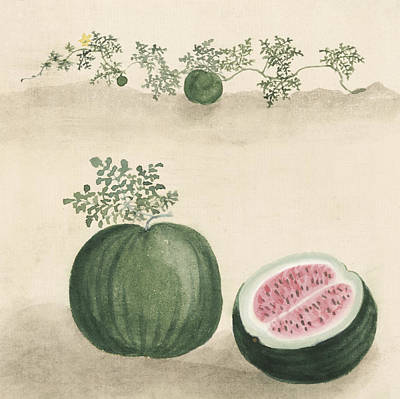 Watermelon Print by Aged Pixel