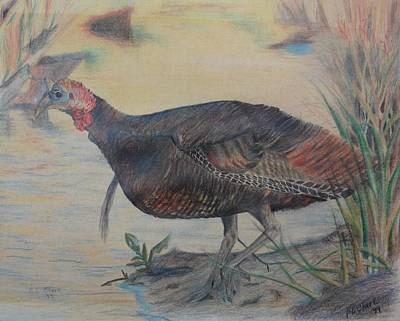 Wild Turkey Drawing - Water's Edge by Peggy Clark
