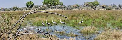 Wattle Photograph - Wattled Cranes Bugeranus Carunculatus by Panoramic Images