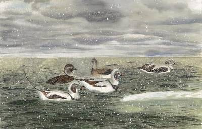 Wayfarers From The Arctic Night - Long-tailed Ducks In A Snow Squall Print by Tanya  Beyer