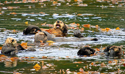 We Otter Be In Pictures Print by Bob Hislop