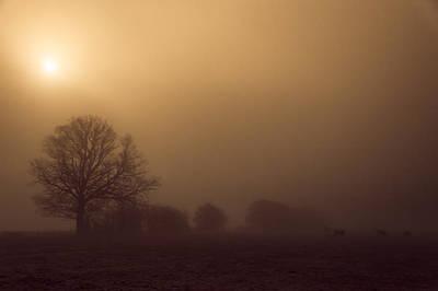 Dairy Farming Photograph - Weak Winter Sun by Chris Fletcher