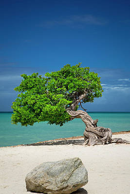 Aruba Photograph - Weathered Fofoti Tree (often Mistaken by Brian Jannsen