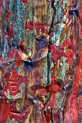 Weathered Print by Marcia Colelli