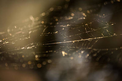 Biologic Photograph - Weaving Webs by Parker Cunningham