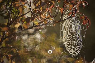 Web Of Life Photograph - Web Of Life by Graham Foulkes