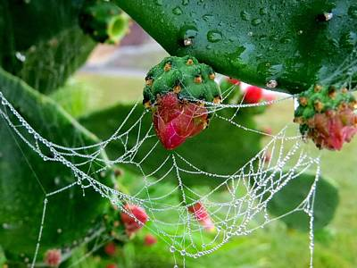 Floral Photograph - Web On The Cactus by Zina Stromberg