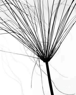 Weed By The Lake Print by Sabrina L Ryan