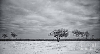 Staten Photograph - Weeping Souls Of Winter Desires by Evelina Kremsdorf