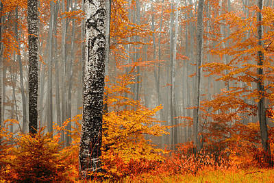 Fog Photograph - Welcome To Orange Forest by Evgeni Dinev