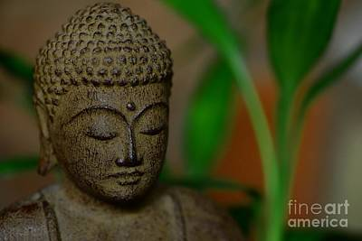 Gautama Photograph - Well Being by Paul Ward