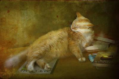 Fine Art Cat Digital Art - Well Read by Kandy Hurley