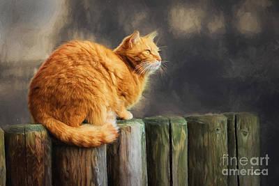 Pets Art Digital Art - Wellness by Jutta Maria Pusl