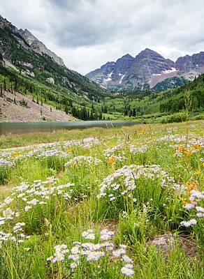 West Elk Wildflowers Print by Adam Pender