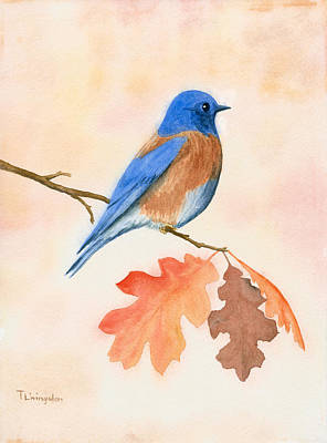 Flycatcher Painting - Western Bluebird by Timothy Livingston