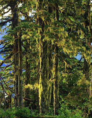 Western Hemlock And Lichen, Temperate Print by Howie Garber