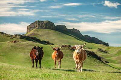 Hilltop Scenes Photograph - Western Longhorns by Todd Klassy
