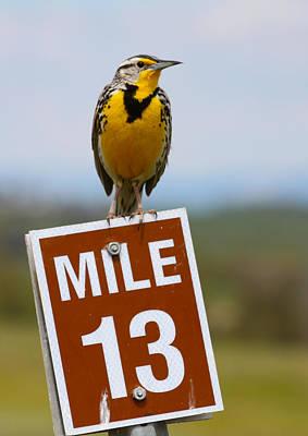 Meadowlark Photograph - Western Meadowlark On The Mile 13 Sign by Karon Melillo DeVega