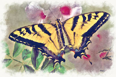 Western Tiger Swallowtail Papilio On Flower Print by Robert Jensen