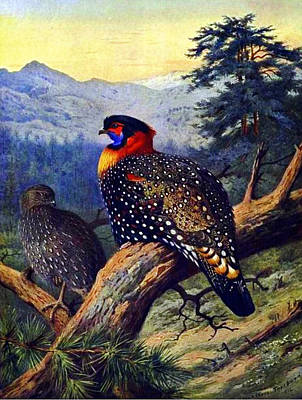 Artistic Painting - Westerntragopan by Celestial Images
