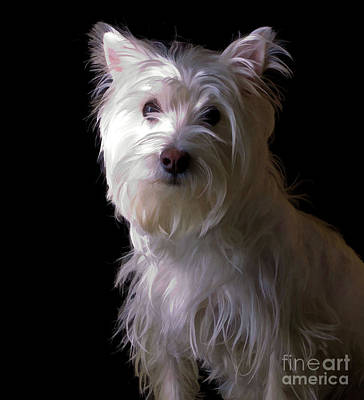 Westie Photograph - Westie Drama by Edward Fielding