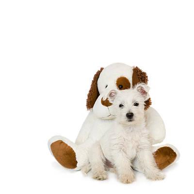 Westie Digital Art - Westie Puppy And Teddy Bear by Natalie Kinnear