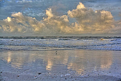 Dowitcher Photograph - Wet And Wild by HH Photography of Florida